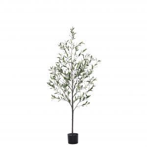 Rogue Olive Tree Green 55x55x170cm