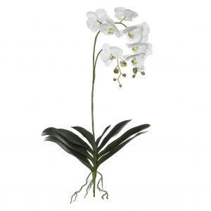 Rogue Black Label RB Grand Phalaenopsis Plant White 42x30x103cm