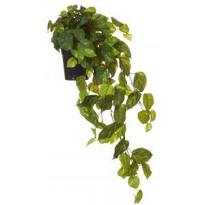 Rogue Pothos Vine-Garden Pot Green/Black 44x40x103cm