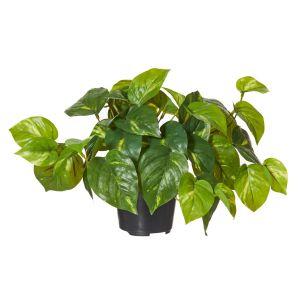 Rogue Pothos-Garden Pot Green/Black 35x35x24cm