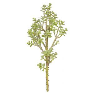 Rogue Tree Succulent Green 18x18x38cm