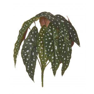 Rogue Spotted Begonia Bush Green 30x30x33cm