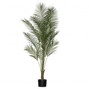 Rogue Black Label RB Areca Palm Green 75x75x150cm