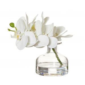 Rogue Phalaenopsis-Glass Vase White 19x15x19cm