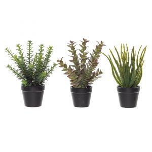 Rogue Black Label (RB) Succulent Mix-Garden Pot 3 Asst. Pack of 6 Burgundy/Green/Black 24/21/21cm