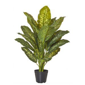 Rogue Dieffenbachia Plant-Garden Pot Variegated/Black 70x70x86cm
