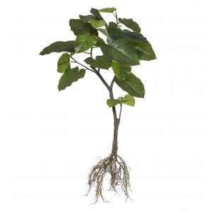 Rogue Ficus Umbrellata Plant Green 55x45x100cm
