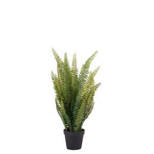 Rogue Boston Fern-Garden Pot Green 26x26x58cm