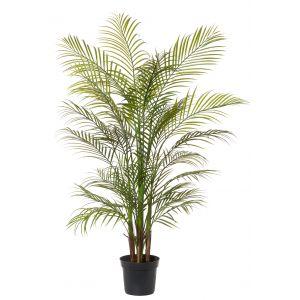 Rogue Areca Palm Green 80x80x135cm