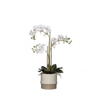 Rogue Butterfly Orchid-Ceramic Pot White/Brown 32x23x66cm