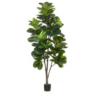 Rogue Giant Fiddle Tree Green 90x90x240cm