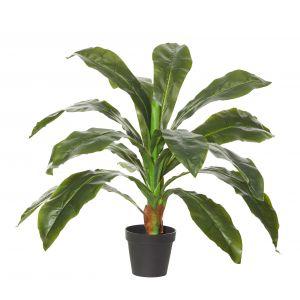 Rogue Birds Nest Plant-Garden pot Green/Black 70x70x60cm