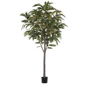 Rogue Ficus Alli Tree Green 120x120x182cm