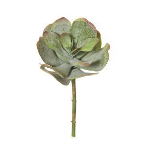 Rogue Flapjack Succulent Green/Burgundy 23x23x38cm