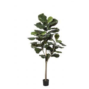 Rogue Fiddle Tree Green 75x75x182cm
