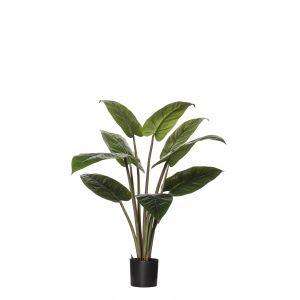 Rogue Philodendron Congo Plant-Garden Pot Green/Black 76x76x84cm