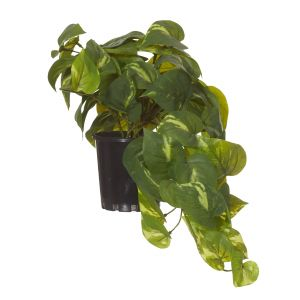 Rogue Pothos Hanging-Garden Pot Green/Black 28x28x40cm