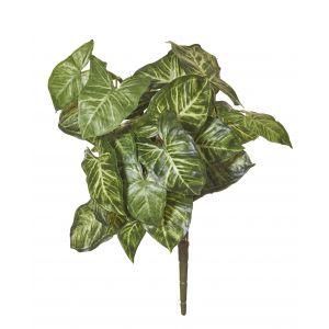 Rogue Syngonium Plant Variegated 35x35x45cm