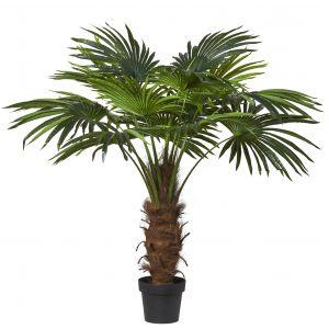 Rogue Fan Palm Green 115x115x135cm
