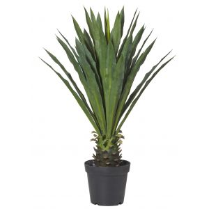 Rogue Yucca Plant Green 68x68x105cm