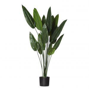 Evergreen by Rogue EG Skybird Plant Green/Black 60x60x120cm