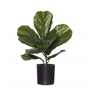 Evergreen by Rogue EG Fiddle Plant-Garden Pot Green/Black 26x26x30cm