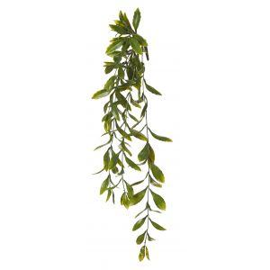 Rogue Hoya Leaf Hanging Bush Green 23x23x64cm