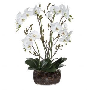 Rogue Black Label Phalaenopsis Bud Mix-Scarlett Vase White/Glass 49x33x76cm