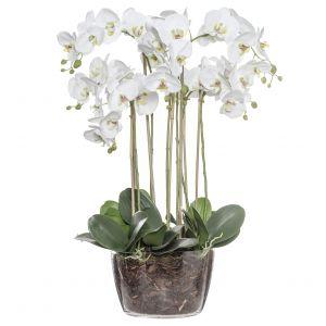 Rogue Phalaenopsis-Classic Bowl White/Glass 62x50x82cm