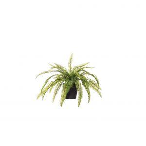 Evergreen by Rogue EG Boston Fern-Garden Pot Green 45x45x32cm