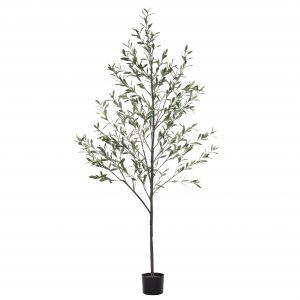 Rogue Olive Tree Green 75x75x200cm