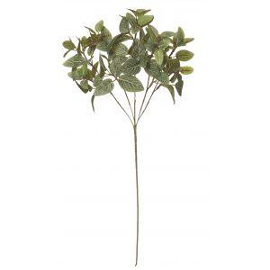 Rogue Fittonia Leaf Spray Green 21x18x61cm