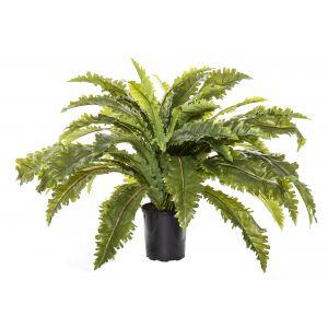 Rogue Asplenium Fern-Garden Pot Green/Black 70x70x50cm