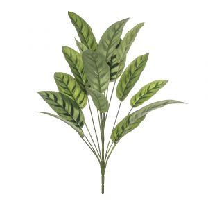 Rogue Calathea Plant Variegated 60x60x71cm
