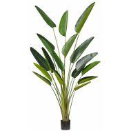 Rogue Giant Bird of Paradise Plant Green 140x140x244cms