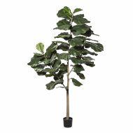 Rogue Fiddle Tree Green 80x80x212cm