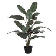 Rogue Calathea Plant-Garden Pot Variegated/Black 80x80x100cm