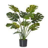 Rogue Monstera Plant-Garden Pot Green/Black 41x41x90cm