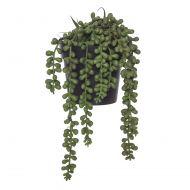 Rogue String of Pearls-Garden Pot Green/Black 14x14x23cm