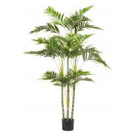 Rogue Cane Palm RT Green 100x80x150cm