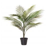 Rogue Areca Palm Green 50x50x65cm