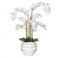 Rogue Butterfly Orchid-Ripple Pot White/White 65x55x95cm