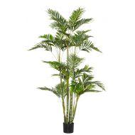 Rogue Cane Palm RT Green 100x90x180cm