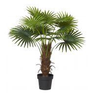 Rogue Fan Palm Green 74x74x100cm