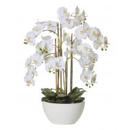 Rogue Butterfly Orchid-Round Pot White/White 50x50x70cm