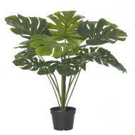 Rogue Monstera Plant-Garden Pot Green/Black 60x60x75cm