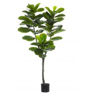 Rogue Giant Fiddle Tree Green 80x60x150cm