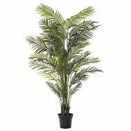 Rogue Areca Palm Green 120x120x213cm