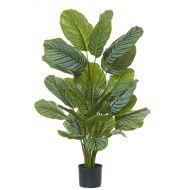 Rogue Calathea Plant-Garden Pot Variegated/Black 70x70x115cm