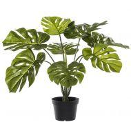 Rogue Monstera Plant-Garden Pot Green/Black 60x60x60cm